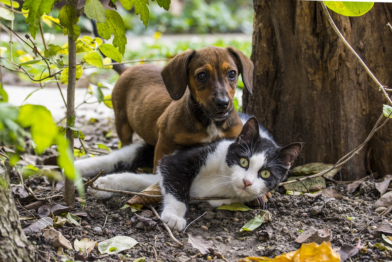 dog, cat, dog - cat friendship